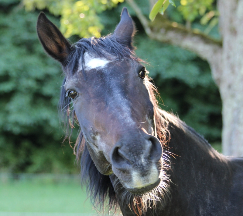 Altersweiden Pferd Willy